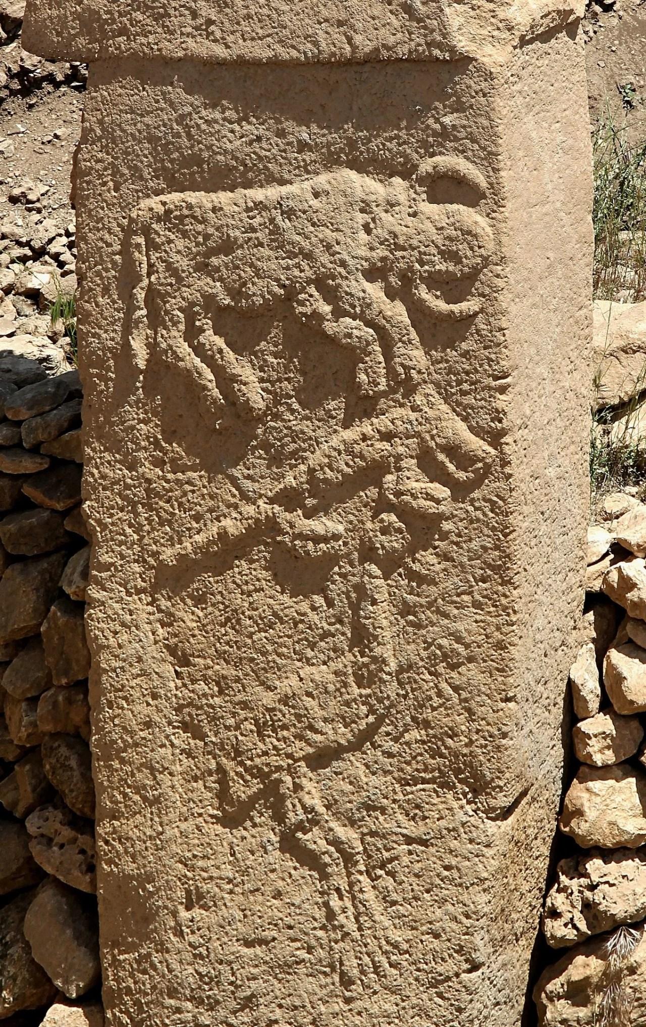 Relevos de animais,em Göbekli Tepe. (Klaus-Peter Simon, Domínio Público)