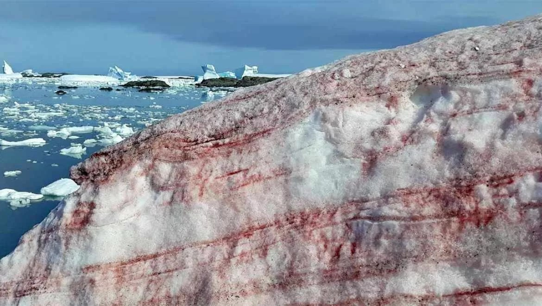Gelo rosa nos Alpes