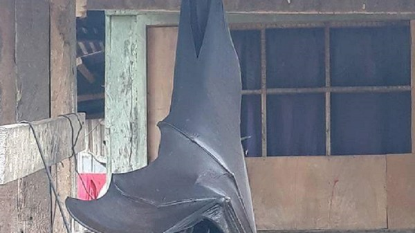 maior morcego da terra 2