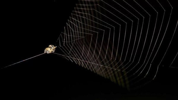 IFL Science, https://www.iflscience.com/plants-and-animals/perus-slingshot-spider-can-propel-itself-100-times-faster-than-a-cheetah/