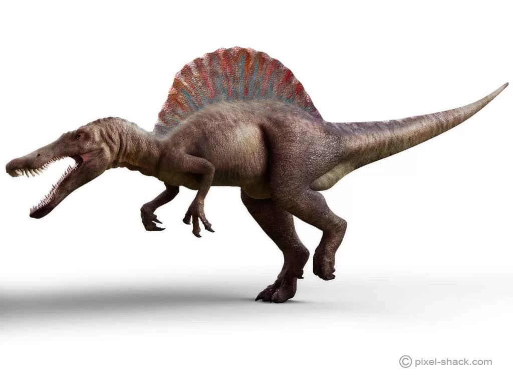 Futura Sciences, https://www.futura-sciences.com/planete/photos/paleontologie-top-10-dinosaures-vous-ne-voudriez-jamais-croiser-677/paleontologie-spinosaure-spinosaurus-dinosaure-taille-4474/