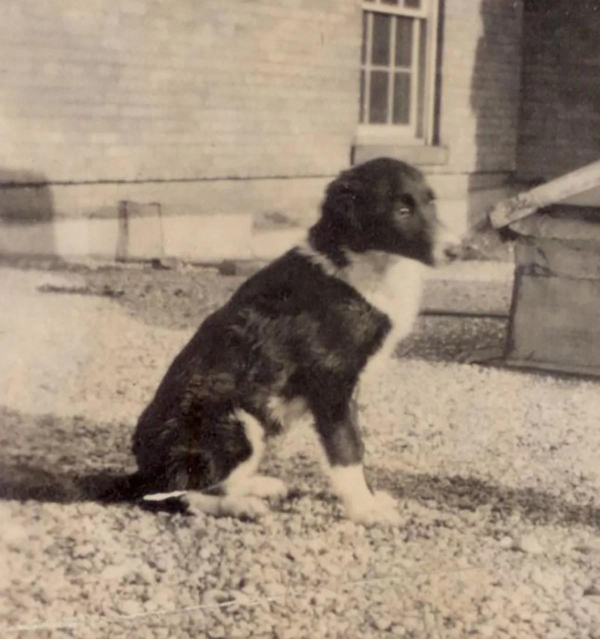 A cadelinha Marjorie os cães mais famosos da ciência