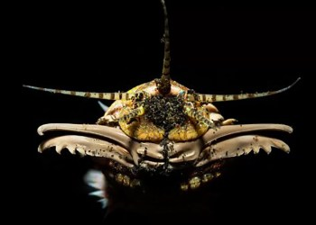 Vermes gigantes carnívoros