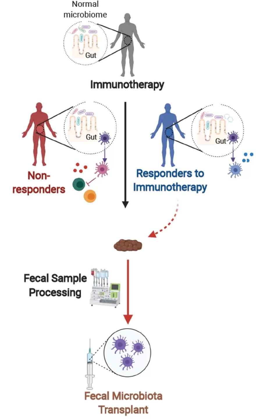 Transplante de micróbios fecais