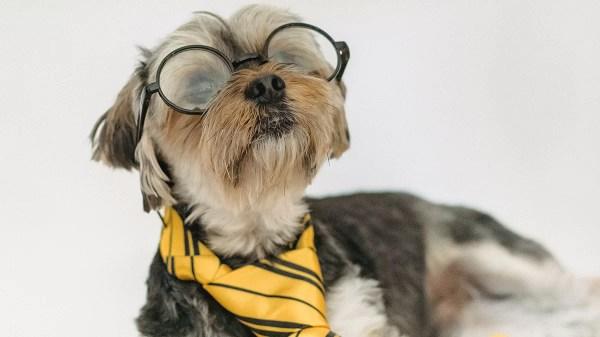 Faça este teste e decubra se seu cachorro é um gênio