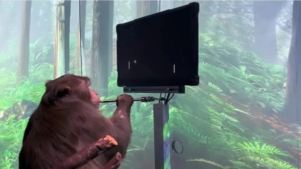 macaco com dispositivo neuralink