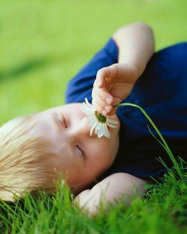 flower2-768862