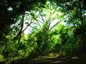 Last look at Tarak's woodland