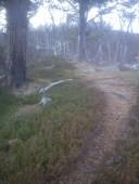 Barfrost gjorde stien fast og lettløpt. Utrolig deilig!