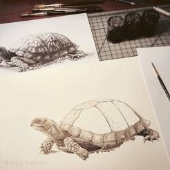 Ink illustration in progress