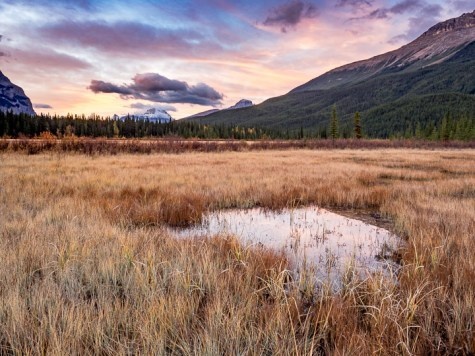 Anonymous sunrise pond - Icefields Parkway