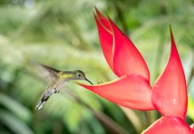 Had to include this one because it's one of only a few photos we have featuring both a hummingbird and a flower!
