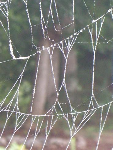 Spiderwebs-006