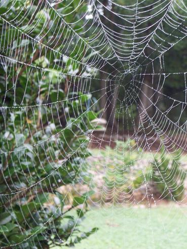 Spiderwebs-010