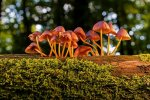 Definition of fungi kingdom - What it is, Meaning and Concept