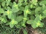 Definition of medicinal plants - What is, Meaning and Concept