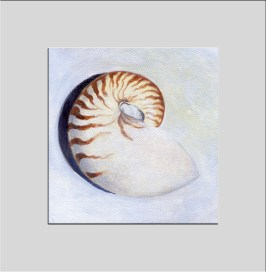 nautilus shell triptych 3 matted
