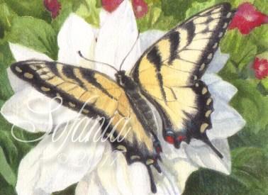 ACEO_butterflies001