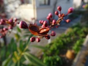 Frühlingsspaziergang_1.26