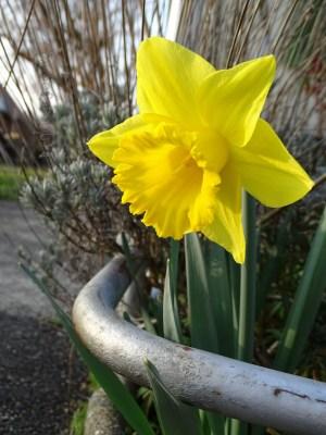 Frühlingsspaziergang_1.28