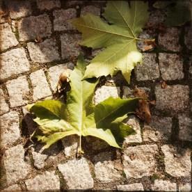 Noch zwei frisch gelandete Blätter