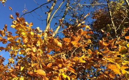 Noch mehr Herbstblattgold