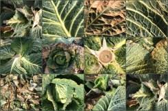 Kohl-Collage aus zwölf Bildern