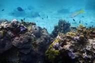 Isla mujeres scuba diving