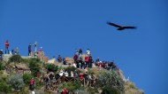 Lot of tourists and a condor