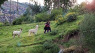Two girls out with their Llamas