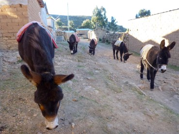 "Donkeys walking around the ""town"""