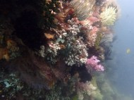 Many corals here, in all colors! Haven't seen so much bright pink before..