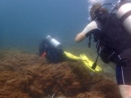 Diving into the forest of soft corals.. haha