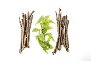 Read more about the article Ashwaganda – seit mehr als 3000 Jahren die ayurvedische Heilpflanze gegen chronischen Stress
