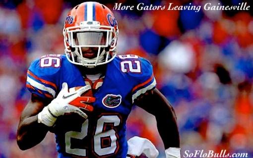 More Gators Leaving Gainesville  by Matthew Manuri  SoFloBulls.com 