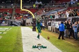 37 - Marshall vs. USF 2018 - USF WR Randal St. Felix by Dennis Akers | SoFloBulls.com