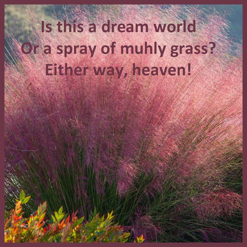 Zen-Garden-Muhly-Grass-Spray