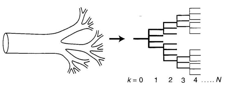 Branching veins representing as a regular, branching network
