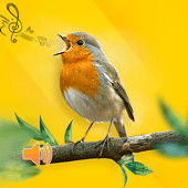 New Birds Ringtones 2020 - Bird sound mp3