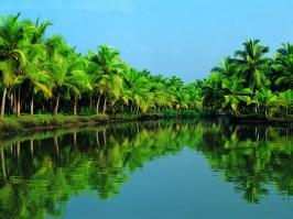 Munnar Backwater