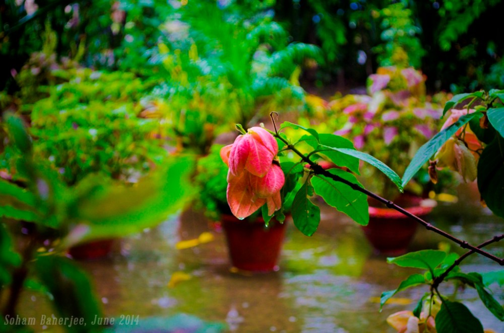 When it Rains, I Bloom in Colours