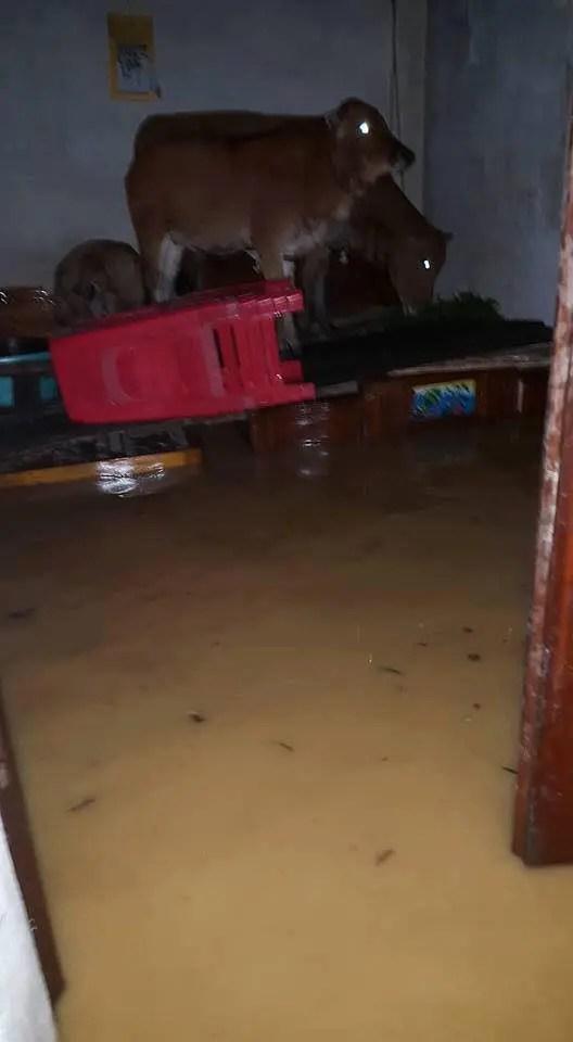 Những hình ảnh mưa lũ ở miền Trung: Xót xa quá! - Ảnh 3.