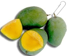 gambar buah mangga
