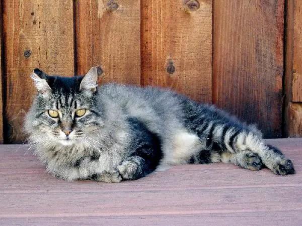 Kucing Dan Kedudukannya Di Dalam Islam