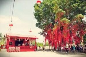 gambar wising tree