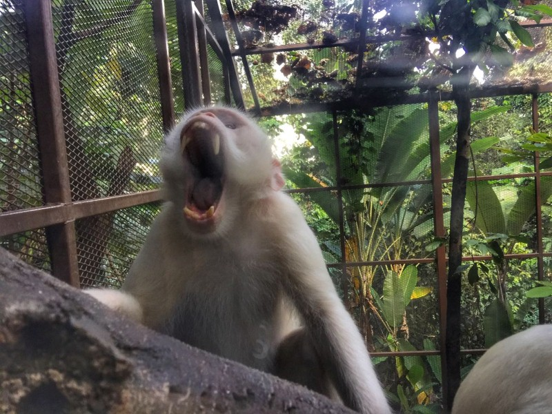 kl-tower-mini-zoo-monyet-albino