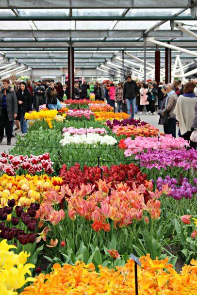 Pavillon Willem Alexander et toutes les sortes de tulipes