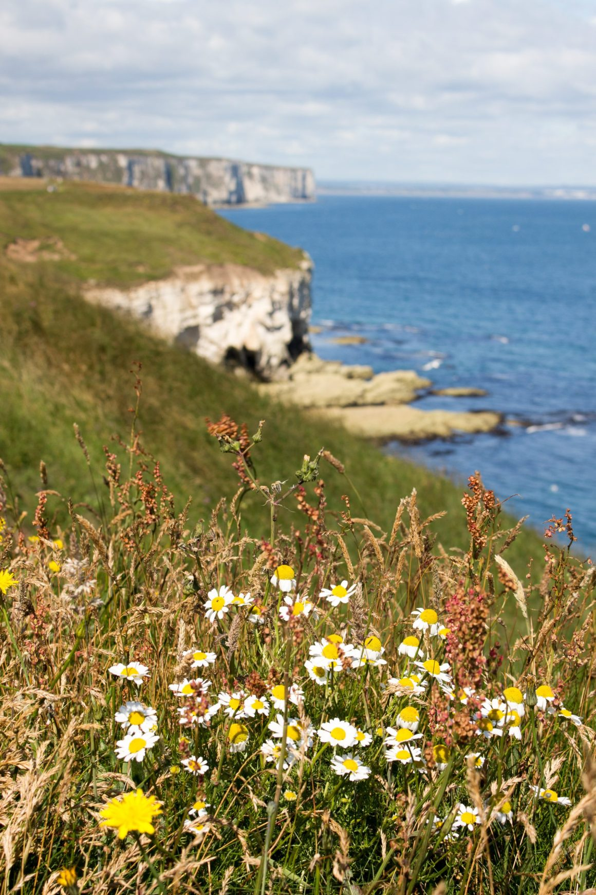 Falaises de Flamborough