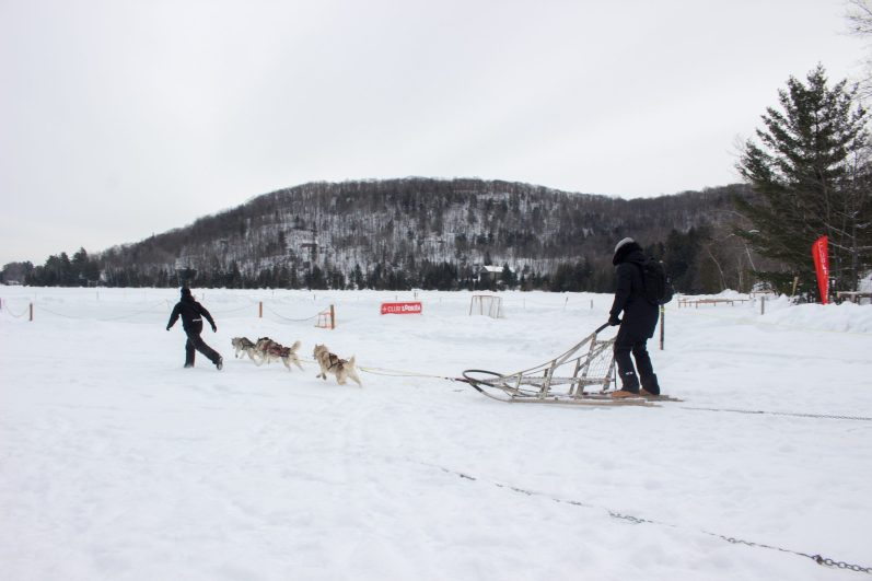 Traîneau à chiens à Aventures plein air