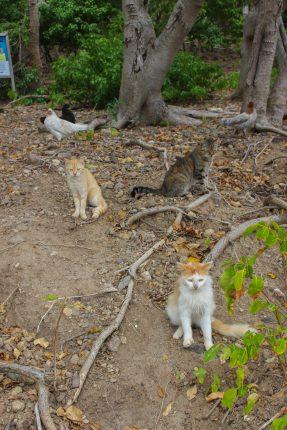 Les chats de l'îlet à Cabrit
